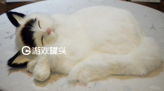 猫咪社区最新版