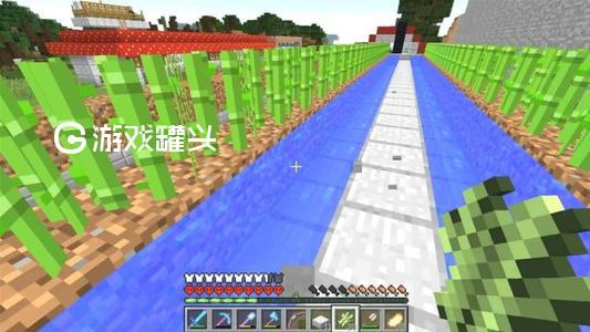 我的世界甘蔗怎么种 我的世界甘蔗有什么用
